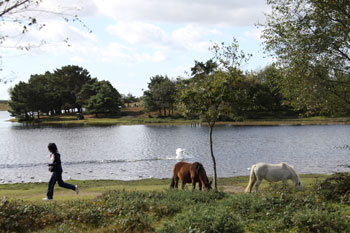 self catering holidays in the New Forest Hampshire