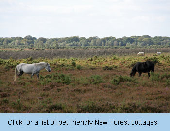 pet friendly New Forest self-catering cottages dogs allowed